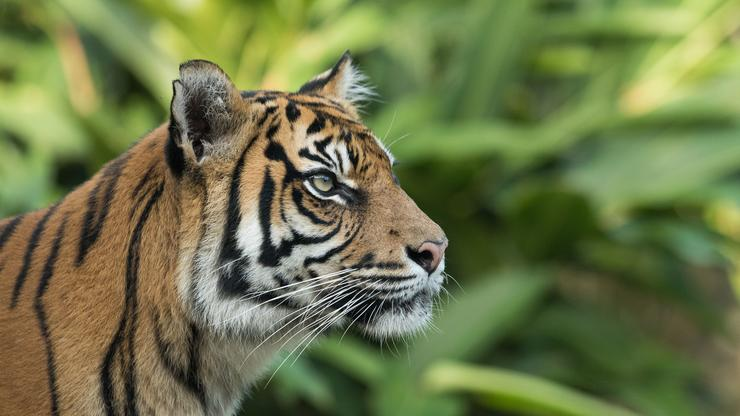 """""""Tiger King"""" Zookeeper Erik Cowie's Cause Of Death Revealed"""